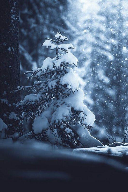 Красивые картинки зимы на заставку телефона (4)