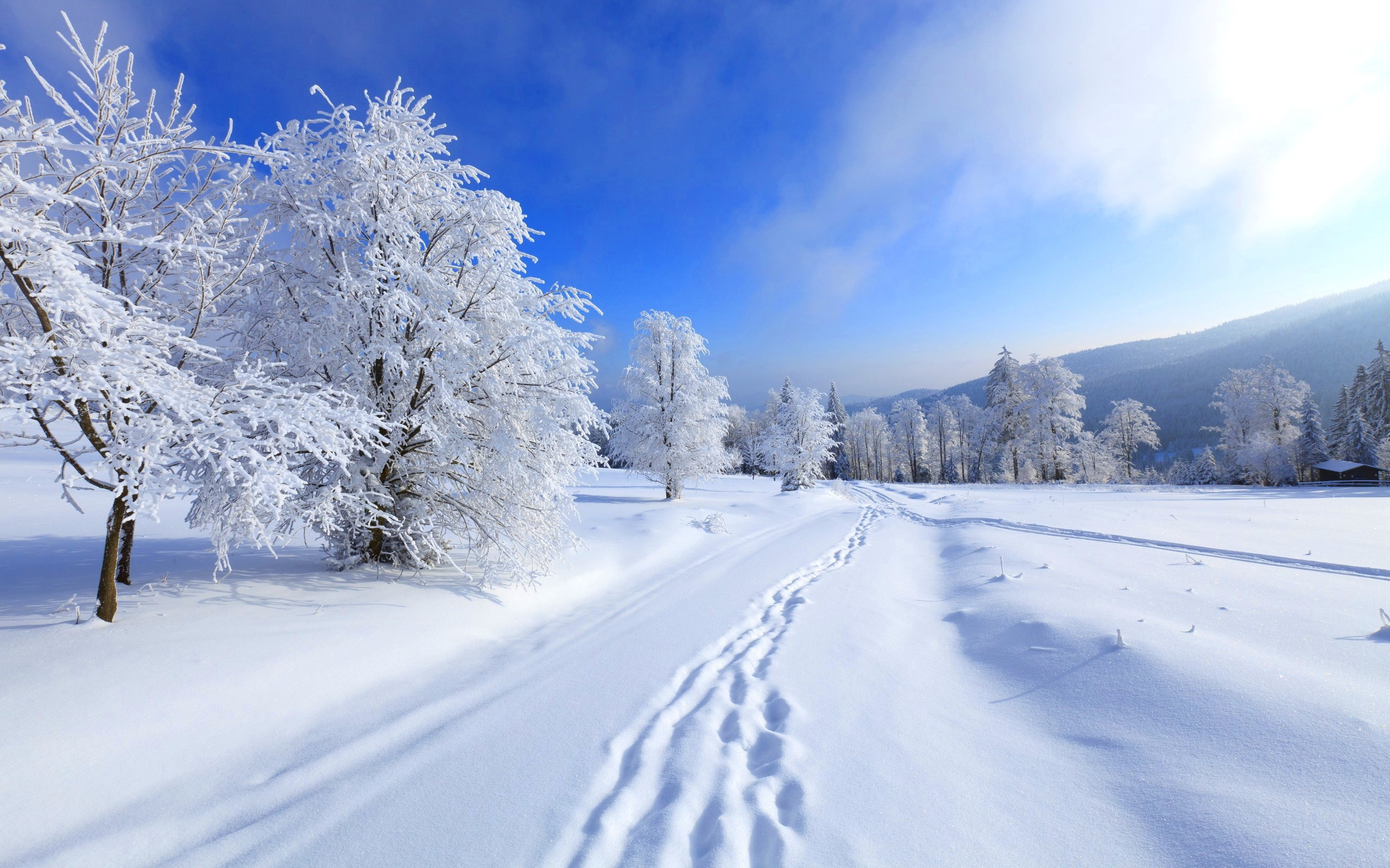 Картинки для рабочего стола зима пейзажи бураны, метели