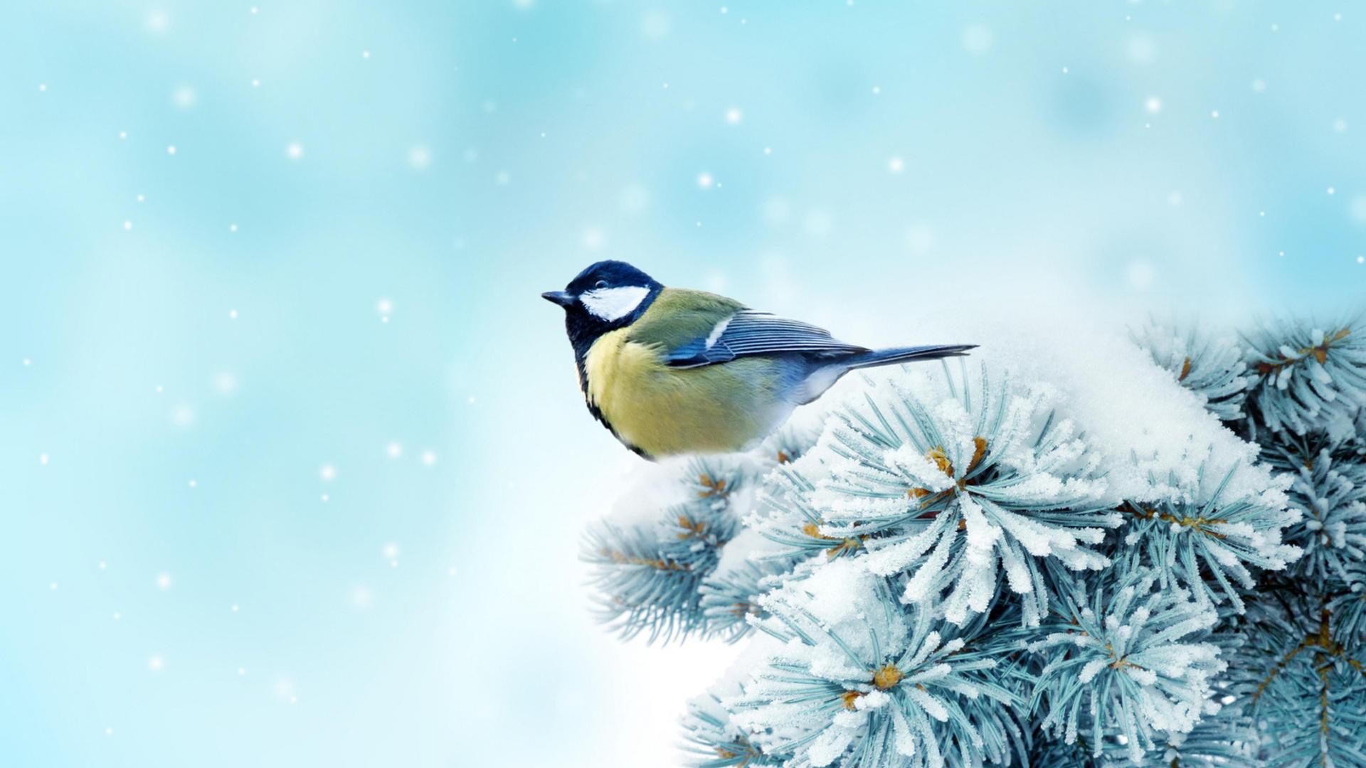 Красивые картинки зимы на рабочий стол в хорошем качестве (2)
