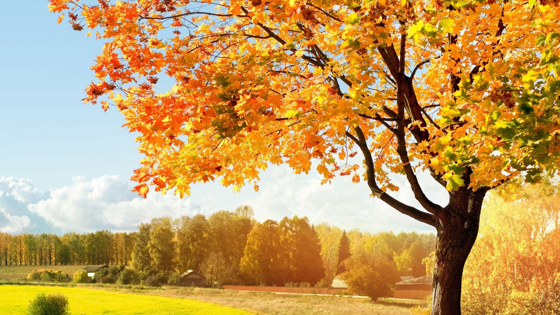 Красивые картинки ноября на рабочий стол (1)