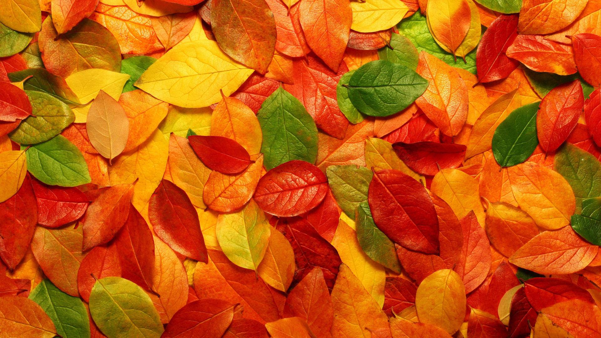 Красивые картинки ноября на рабочий стол (3)