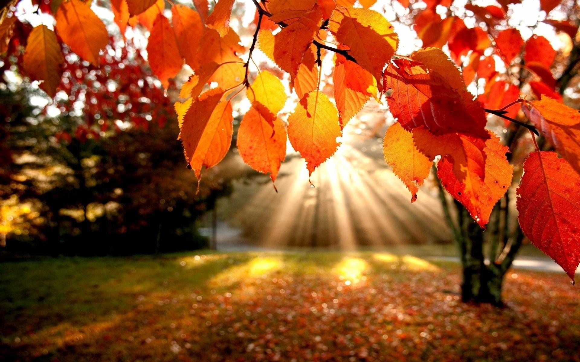 Красивые картинки ноября на рабочий стол (5)