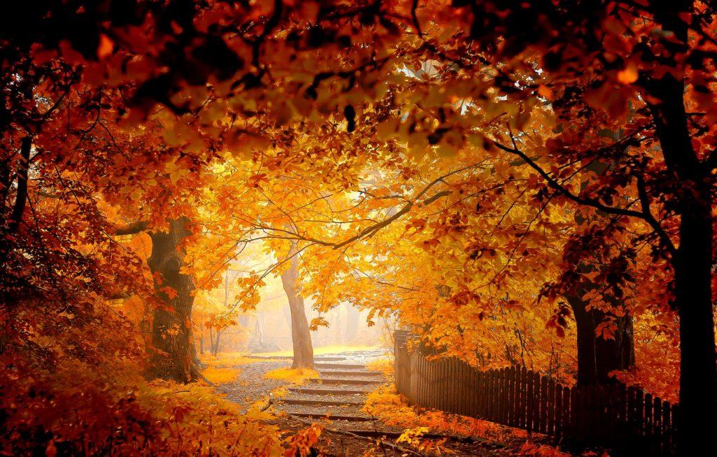 Красивые картинки ноября на рабочий стол (9)