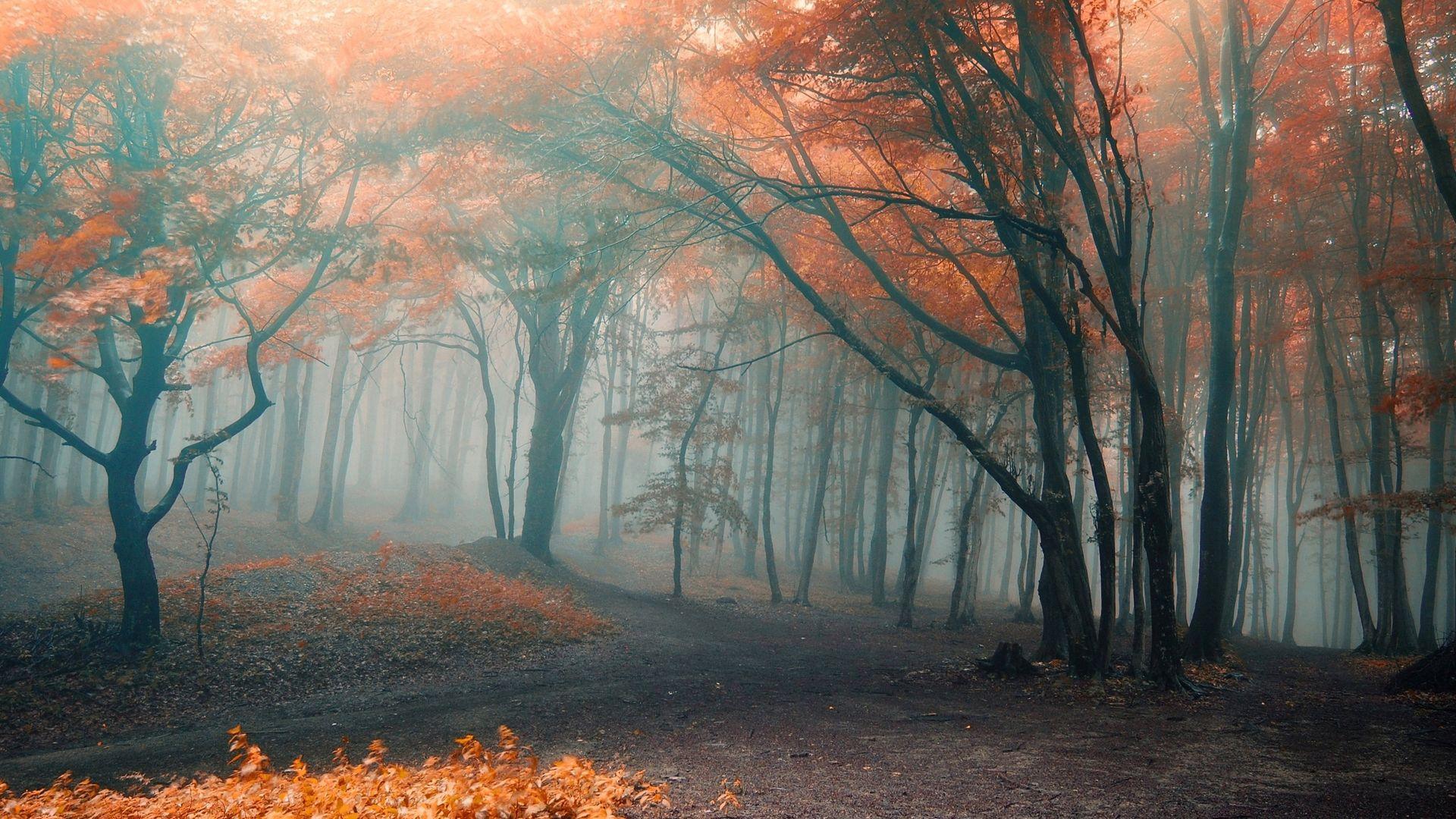 Красивые картинки поздняя осень на рабочий стол (10)