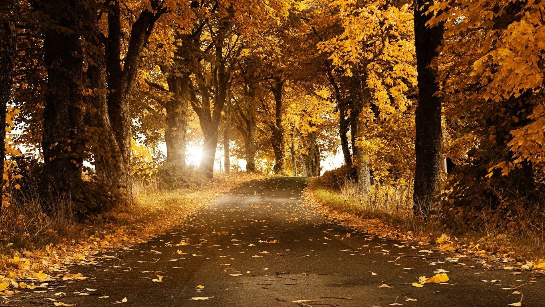 Красивые картинки поздняя осень на рабочий стол (11)