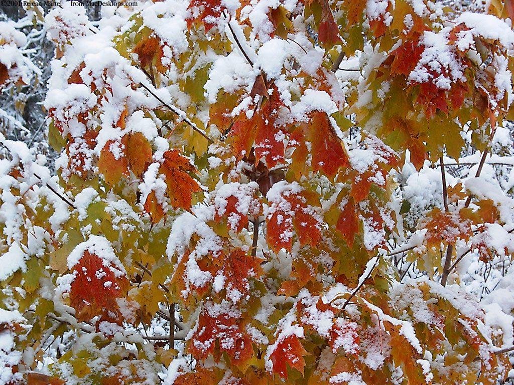 Красивые картинки поздняя осень на рабочий стол (13)