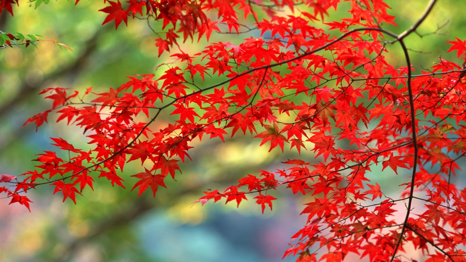 Красивые картинки поздняя осень на рабочий стол (14)