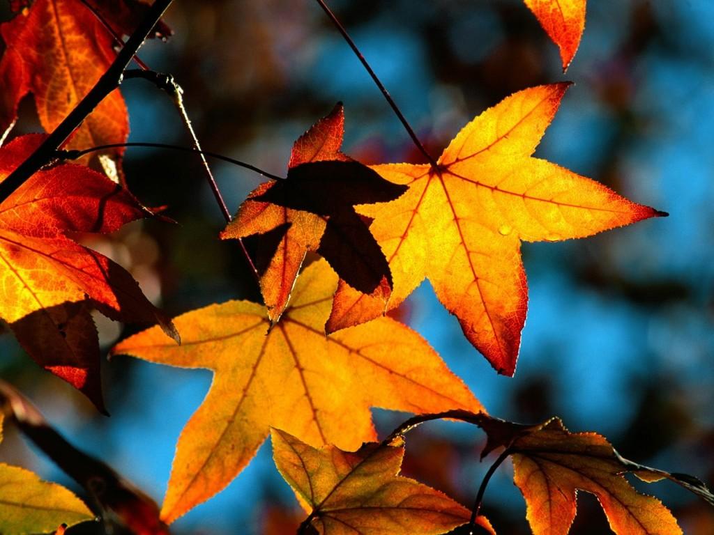 Красивые картинки поздняя осень на рабочий стол (15)