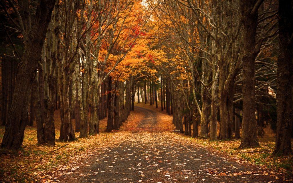 Красивые картинки поздняя осень на рабочий стол (18)