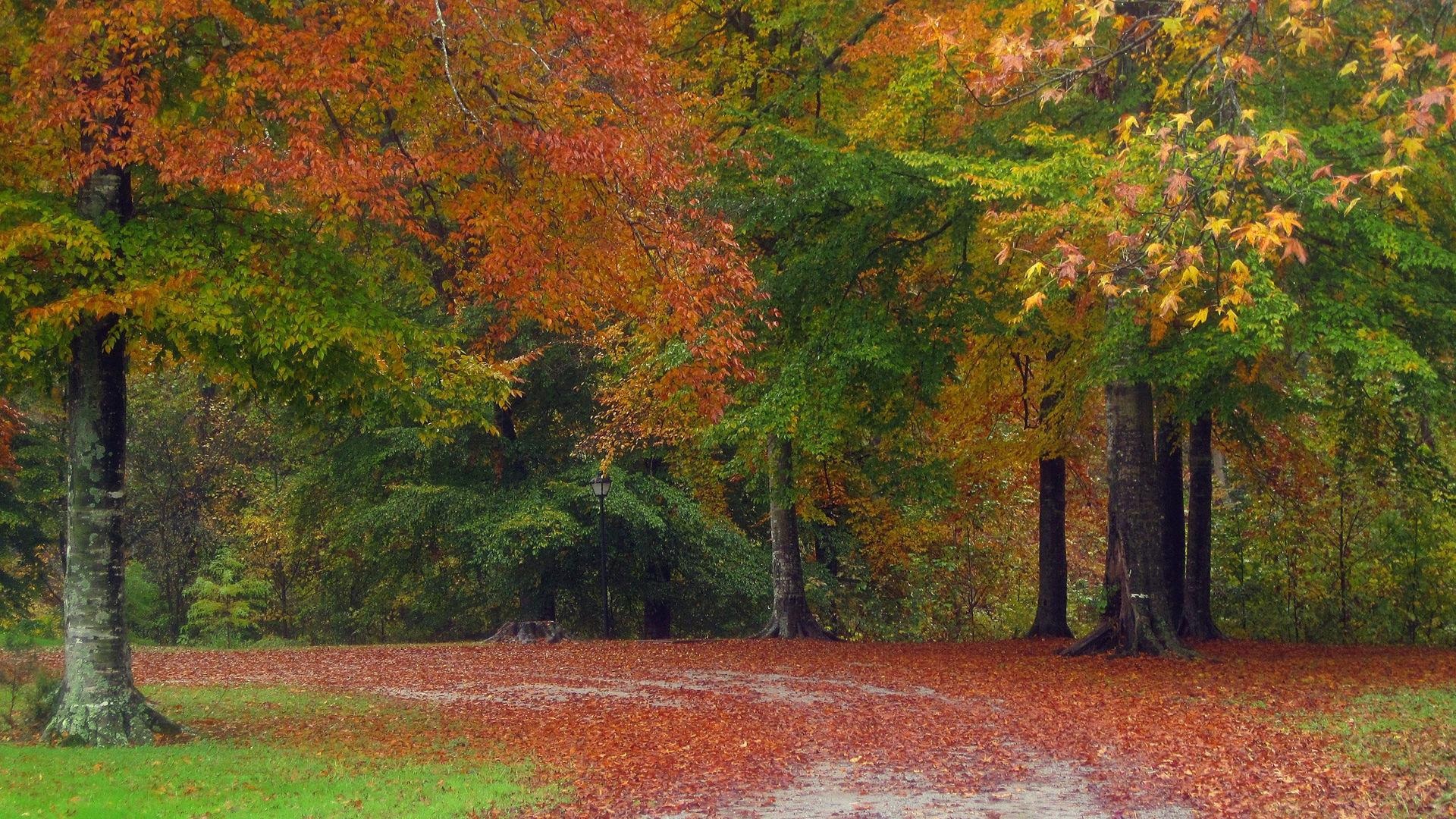 Красивые картинки поздняя осень на рабочий стол (2)