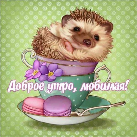 Красивые открытки с добрым утром любимой девушке011