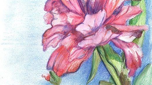 Красивые рисунки пастелью для срисовки005