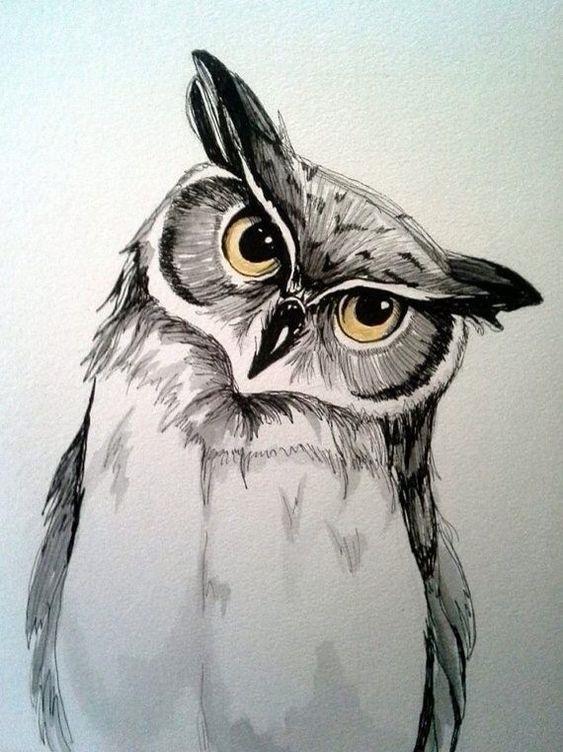 Красивые рисунки совы для срисовки002