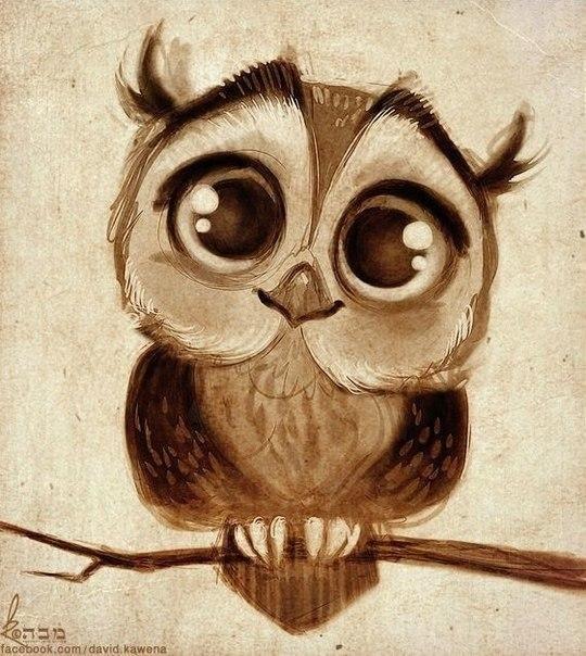 Красивые рисунки совы для срисовки010
