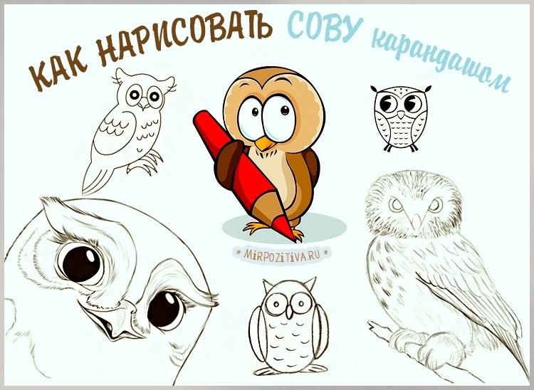 Красивые рисунки совы для срисовки014