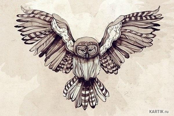 Красивые рисунки совы для срисовки021