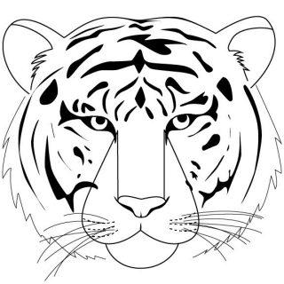 Красивые рисунки тигра для срисовки002