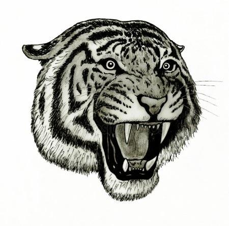 Красивые рисунки тигра для срисовки005