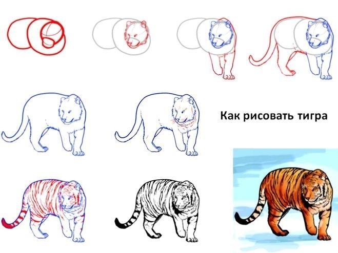 Красивые рисунки тигра для срисовки006