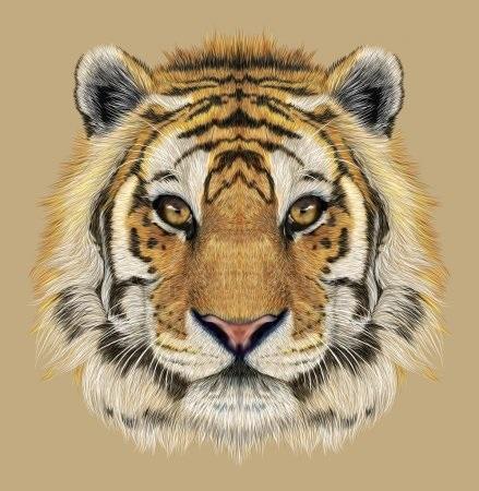 Красивые рисунки тигра для срисовки008