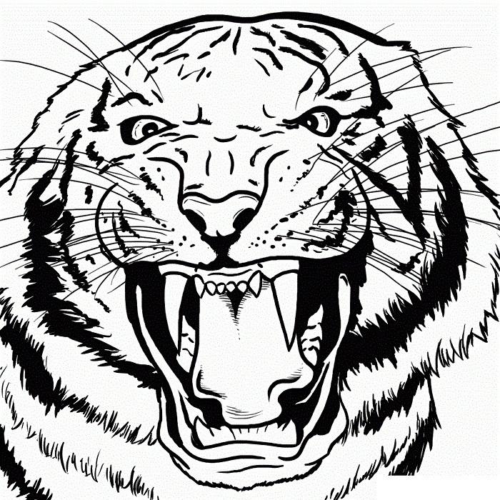 Красивые рисунки тигра для срисовки009