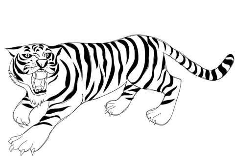 Красивые рисунки тигра для срисовки010