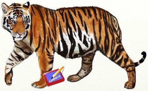 Красивые рисунки тигра для срисовки011
