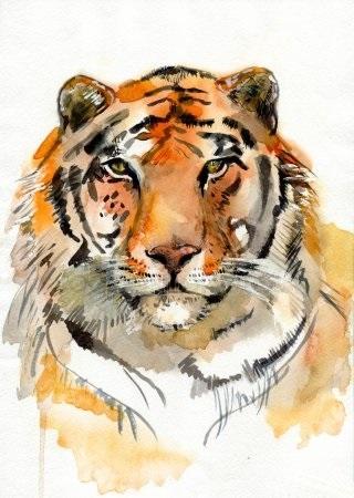 Красивые рисунки тигра для срисовки014