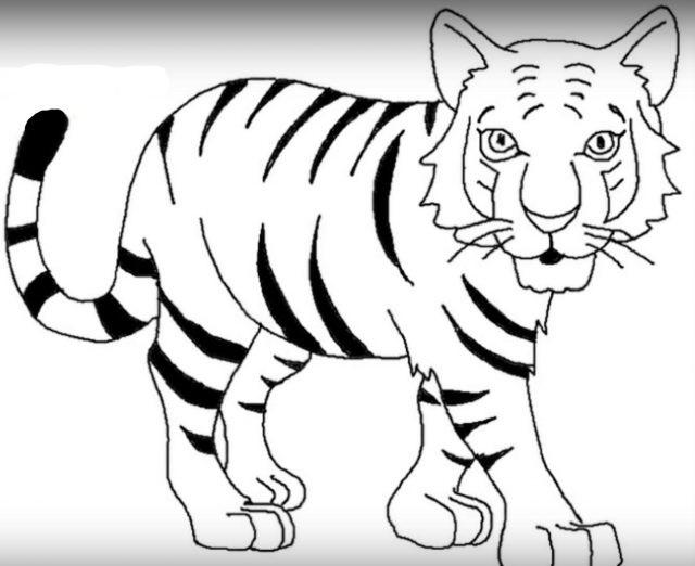 Красивые рисунки тигра для срисовки017
