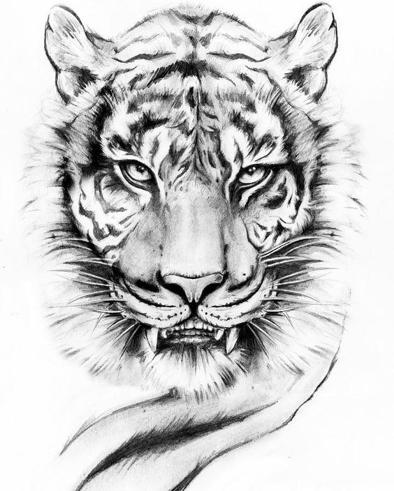 Красивые рисунки тигра для срисовки023