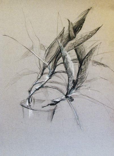 Красивые рисунки углем для срисовки021