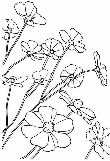 Красивые рисунки цветов для срисовки (1)