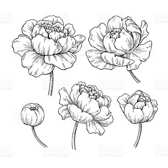 Красивые рисунки цветов для срисовки (13)