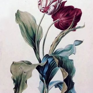 Красивые рисунки цветов для срисовки (14)