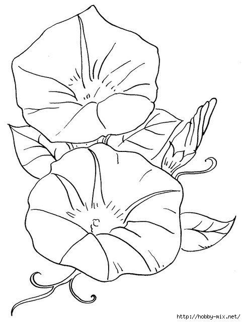 Красивые рисунки цветов для срисовки (16)