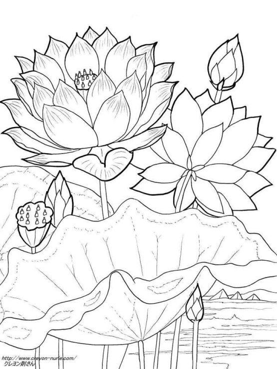 Красивые рисунки цветов для срисовки (17)