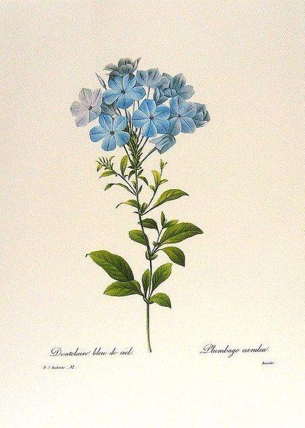 Красивые рисунки цветов для срисовки (3)