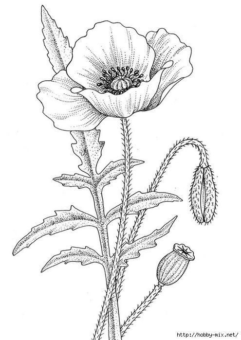 Красивые рисунки цветов для срисовки (5)