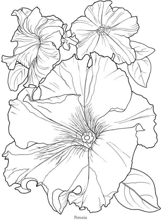 Красивые рисунки цветов для срисовки (9)