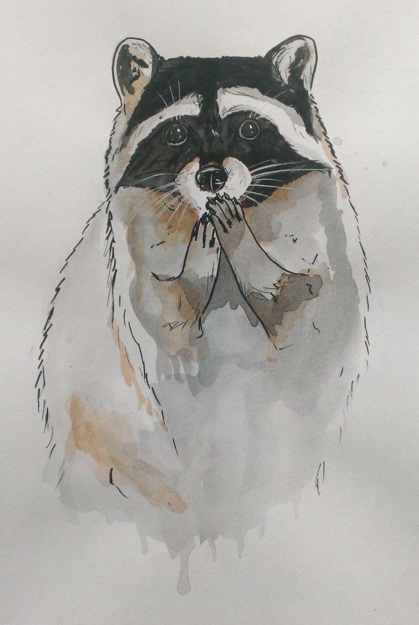 Красивый рисунок акварелью Енот (10)