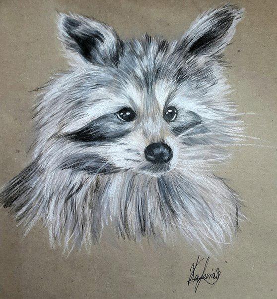Красивый рисунок акварелью Енот (16)