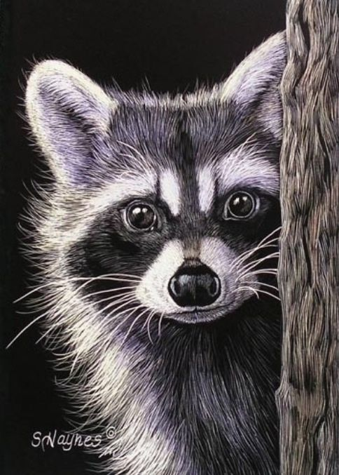 Красивый рисунок акварелью Енот (18)