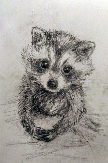 Красивый рисунок акварелью Енот (24)