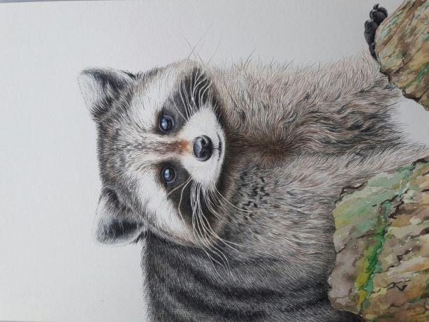 Красивый рисунок акварелью Енот (25)