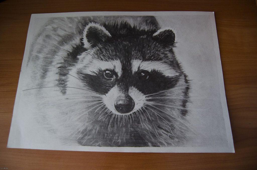 Красивый рисунок акварелью Енот (37)