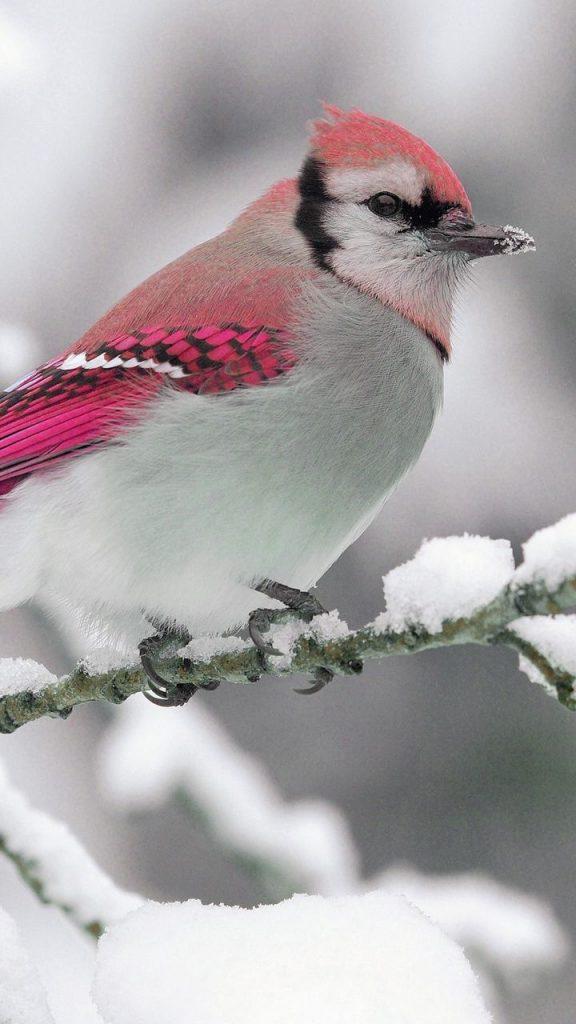 Лучшие заставки зимы на телефон (1)