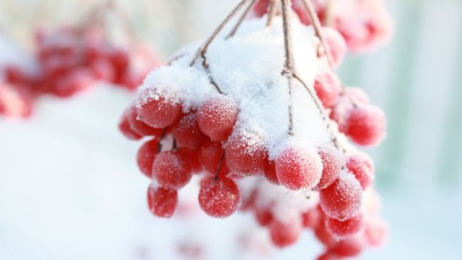 Лучшие заставки зимы на телефон (18)
