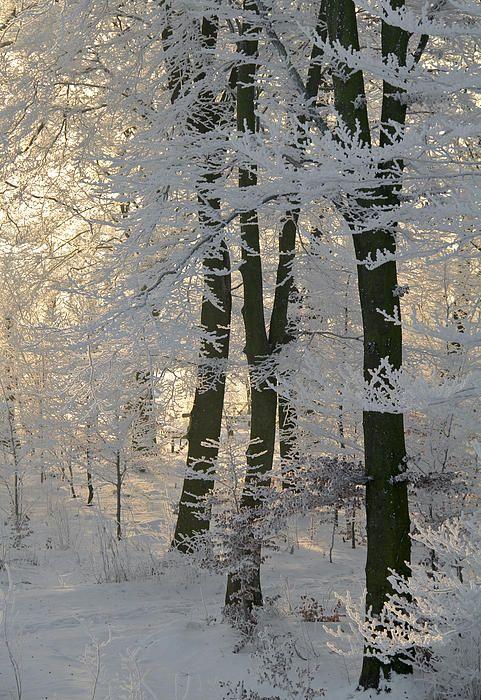 Лучшие картинки зимы на телефон (14)