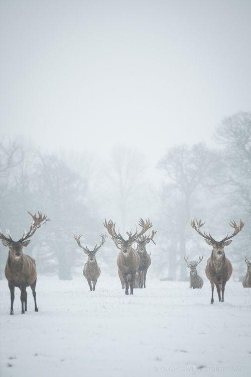Лучшие картинки зимы на телефон (2)