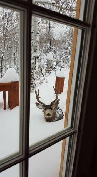 Лучшие картинки зимы на телефон (28)